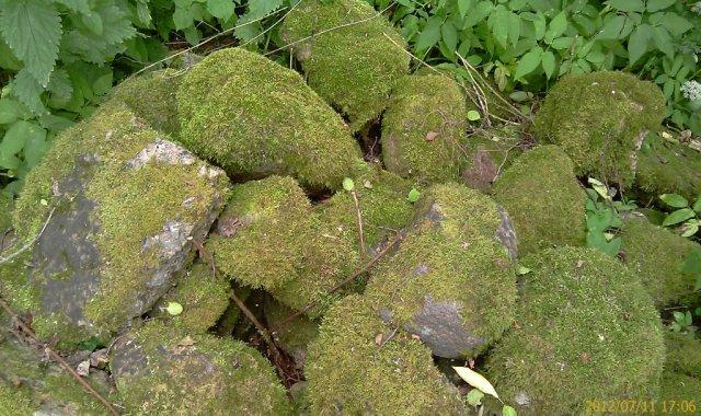 Камни во мхе