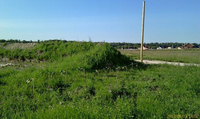 У соседа котлован зарос травой