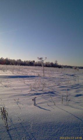 Борщевик Вася зимой